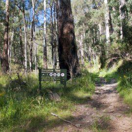 Bungalow Spur Track Harrietville