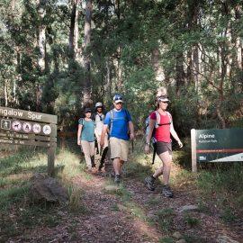 Bungalow Spur walk Harrietville